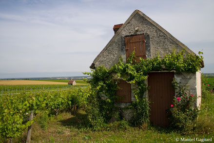 vineyard-lodge-Bléré-Loire-Valley-wine-tourism-wine-tours-Manuel-Gagnard