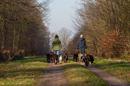 Dogwalker Praktikum bei Vivien Buckendahl