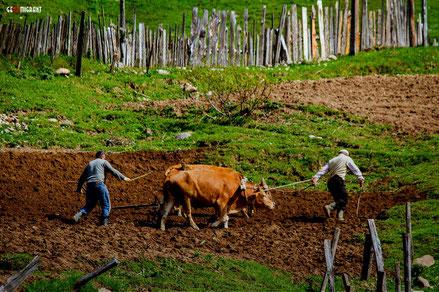 Впервые в Грузии пройдет фестиваль умений «Udabno Rural Fest»