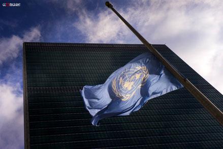 Знаменитый грузинский фильм «Мандарины» покажут в Европарламенте и ООН