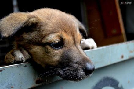 15 летний Тбилисец спас жизни 60 бездомных собак