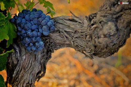 National Geographic: «Грузия, Колыбель виноделия»