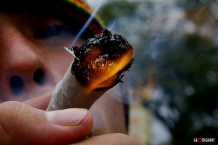Парламент Грузии приступает к рассмотрению вопроса легализации марихуаны