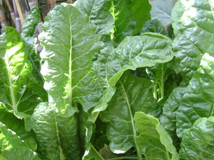 Frischer Spinat und Creme Fraiche: schnelle Soße