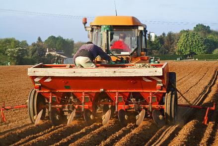 Plantation des pommes de terre Sarl des Estuaires Meursac producteur pomme de terre tomate Charente-Maritime consommateur exploitation agricole qualité