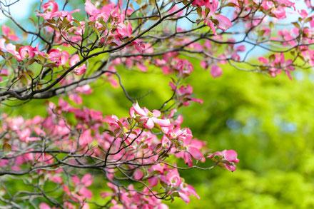 Le printemps selon la médecine chinoise