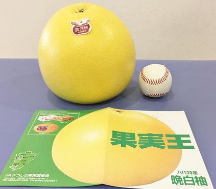 """柑橘類ザボン区分で重量世界一""""晩白柚(ばんぺいゆ)"""""""