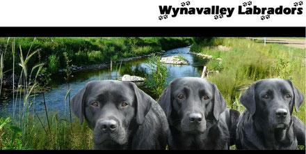 Wynavalley Labradors (Marlise Merz)