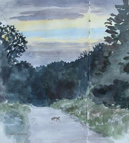 Chat forestier, Felis sylvestris, aquarelle Jean Chevallier