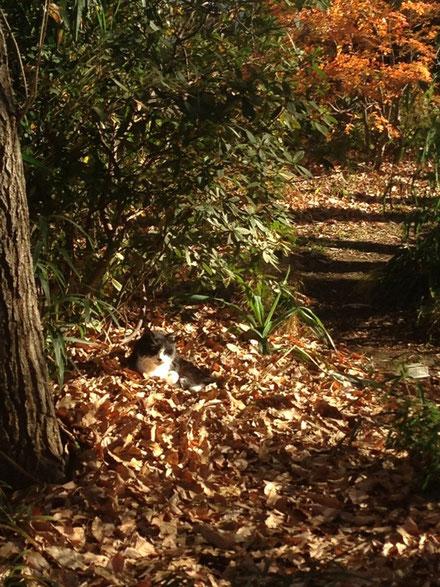 ふかふか落ち葉のベッド