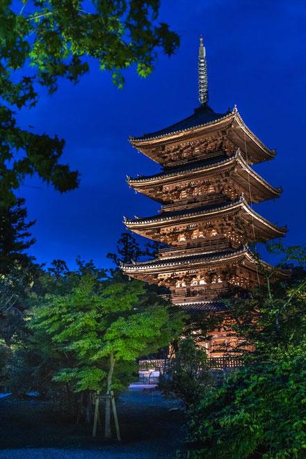 仁和寺青紅葉ライトアップ五重塔