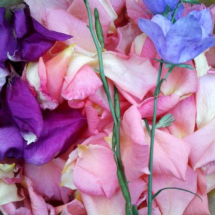 Kathrins Papier gesammelte Blütenblätter
