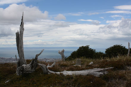 Die Bucht von Punta Arenas, Ausflug mit Kind Punta Arenas, Chile