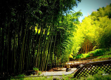 © Winifred. Hakone Gardens, Saratoga CA. Feel like giving up sometimes? Remember we are growing our roots, just like the bamboo. We too will rise like the bamboo.