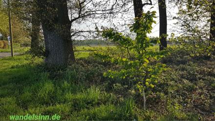 Am schönen Niederrhein