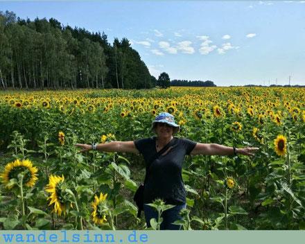 Sonnenblumenfeld in Mecklenburg