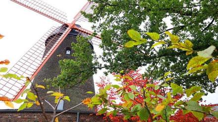Teloy-Mühle in Latum