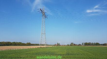 Weite Sicht am Niederrhein