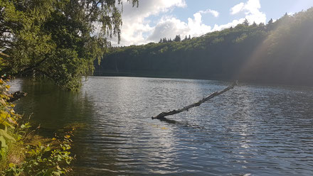 Baumstumpf am See, Koldenhof