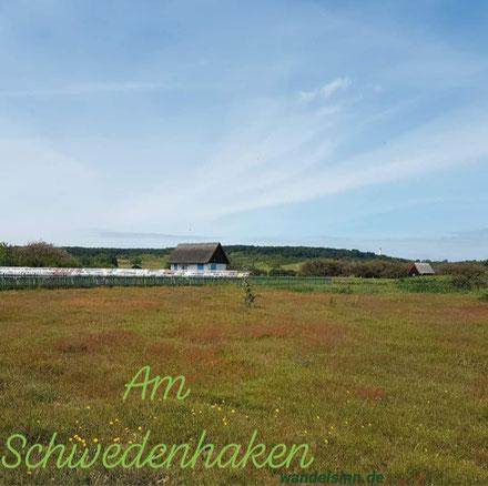 Schwedenhaken - Hiddensee