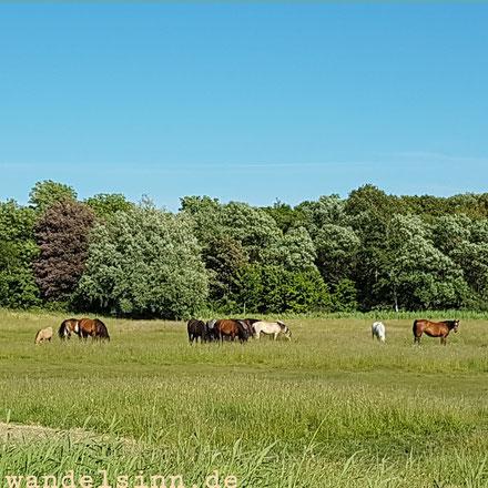 Insel Hiddensee - Pferdeland