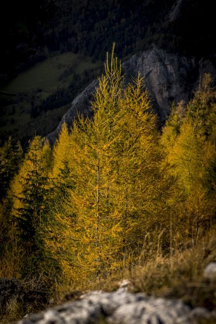 Aufgabe - Herbst