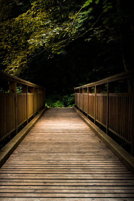 Andrea - Foto 7 - Brücke im Wald