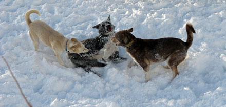 Bessi und Argo gegen Baltus
