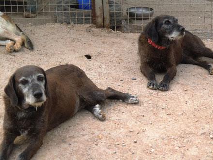 Wer kennt sie nicht, unsere beiden, die seit  Februar 2008 im Tierheim in Lleida sind: Dori und Dorita, das unzertrennliche Geschwisterpaar