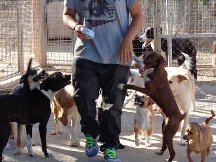 Beim Anklicken des Bildes öffnet sich die Übersicht über unsere Hunde in der Vermittlung