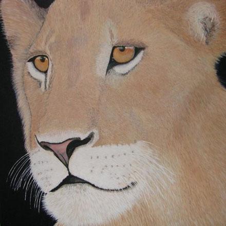 Lion MARJANI 70 x 70 cm, Acryl, CHF 750.--