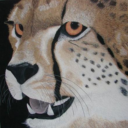 Cheetah SAKILE 70 x 70 cm, Acryl, CHF 750.--