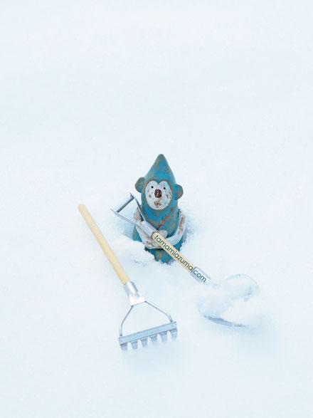 サルの雪かき「なんでも知っている陶サル」