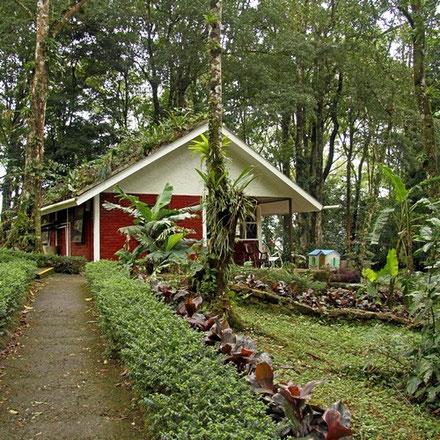 Unsere Hütte im Wald