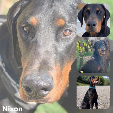 NIXON adopté en Décembre 2017