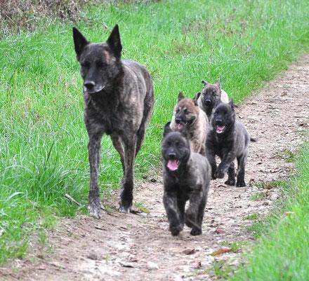 Dido, Bobbie, Huck, Hendrik en Sienna