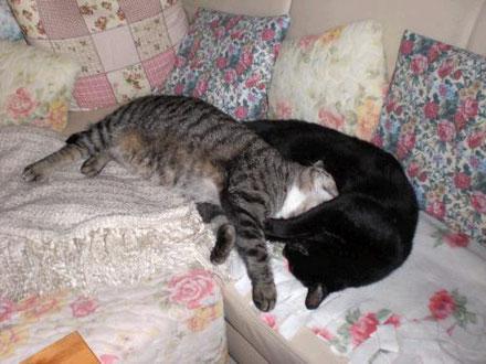 Homöopathie für nierenkranke Katzen
