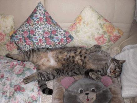 Ursachen, Homöopathie und Bachblüten wenn die Katze sich ihr Fell ausleckt
