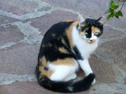 Natürliches bei Verstopfung der Katze
