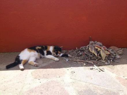 Auch bei Epilepsie der Katze hat die Homöopathie gute Möglichkeiten.
