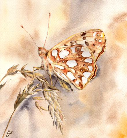 papillon, aquarelle, illustration, naturaliste, petit nacré, illustrateur