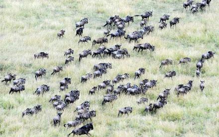 5-days-tanzania-safari-ngorongoro-serengeti-lake-manyara.jpg