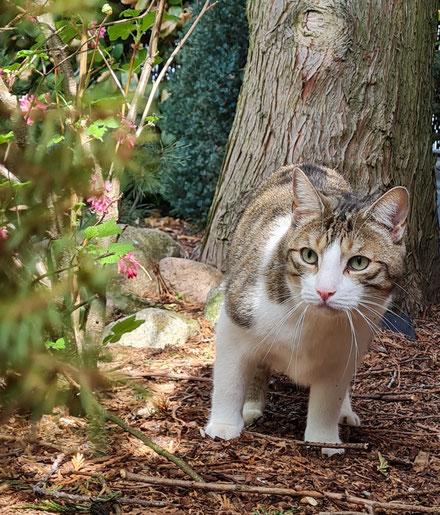 Katze Kasi ist Teilzeitfreigänger