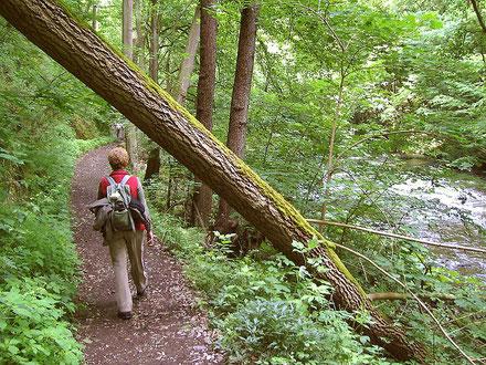 Joggen Wandern Nordic Walking Bad Schussenried