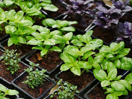 foire aux plantes de lons le saunier - association llb - produteurs du jura