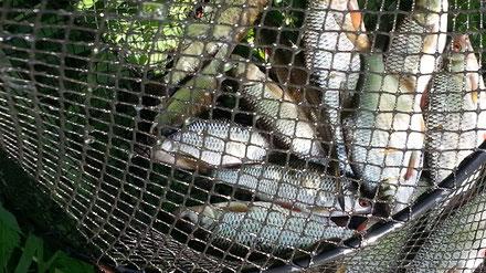 Третий улов за день