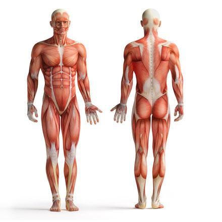 Training Rückenmuskeln