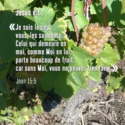 Jésus est appelé La pierre vivante, la pierre angulaire ou la pierre de fondement; la Résurrection et la Vie, le Dernier Adam, l'époux de la Nouvelle Jérusalem; Le vrai cep, le vrai cep de vigne, la vraie vigne; Le nouveau nom connu de Jésus et 144'000.