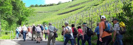 Wandern Sie mit uns von Ahrweiler nach Dernau inklusive einer Weinprobe an der Ahr