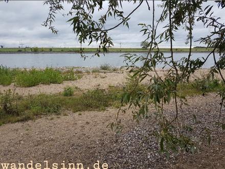 Rheinauen mit Strand
